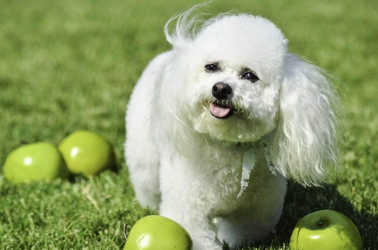 small dog breed