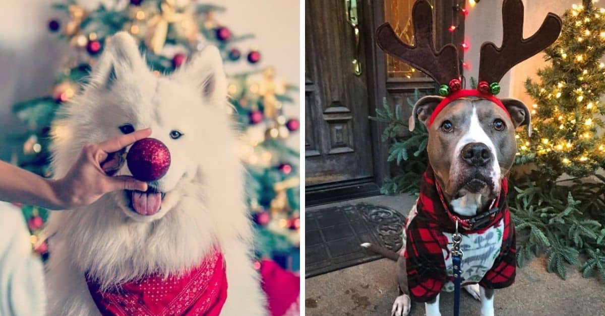 Dogs To Put You In The Holiday Spirit
