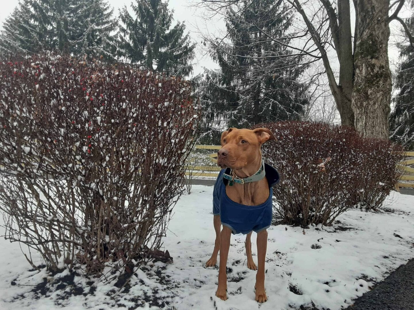 rescue dogs first snow