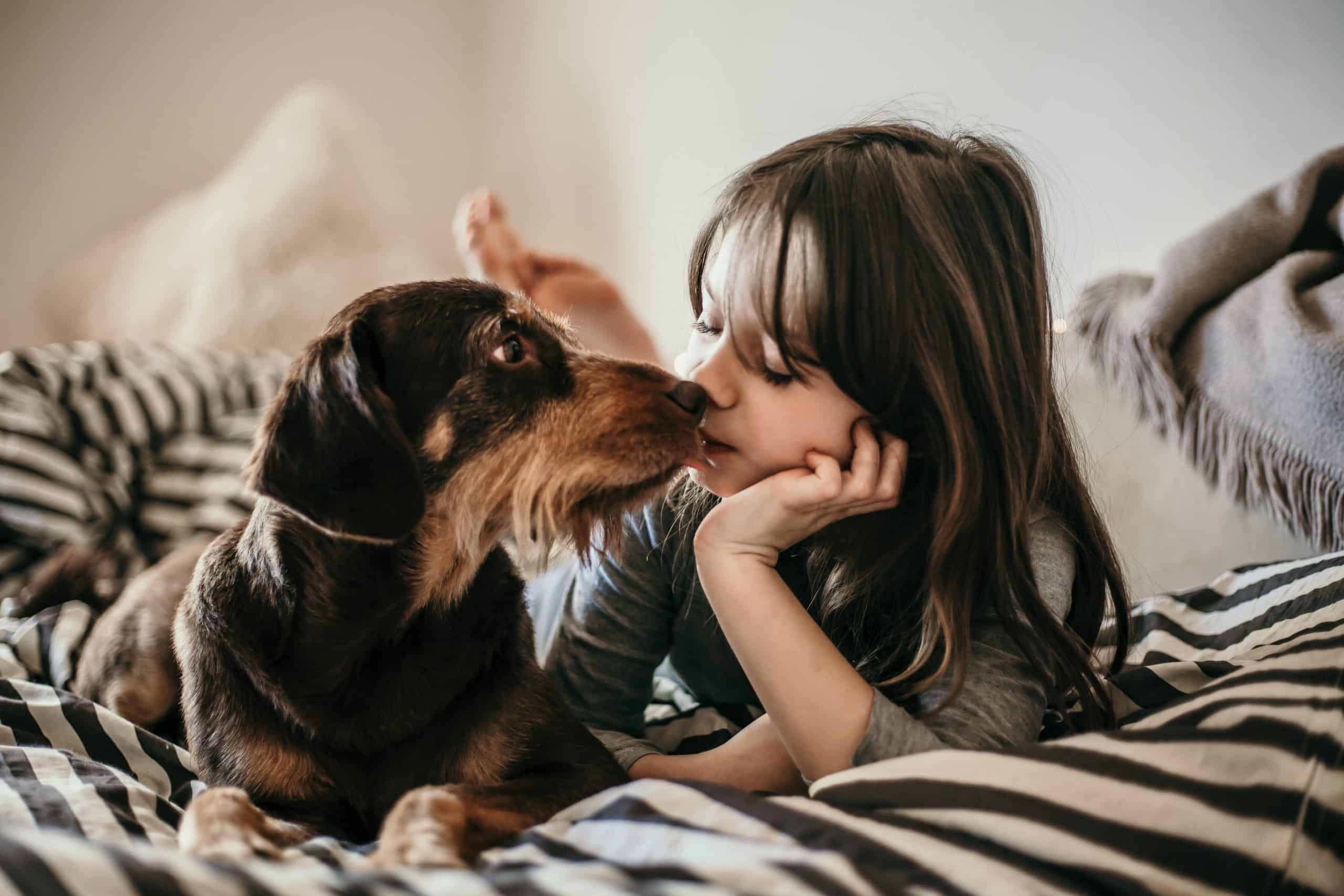 dogs choose their favorite human