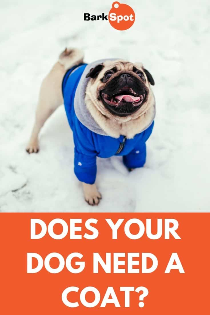Does Your Dog Need A Coat Pin