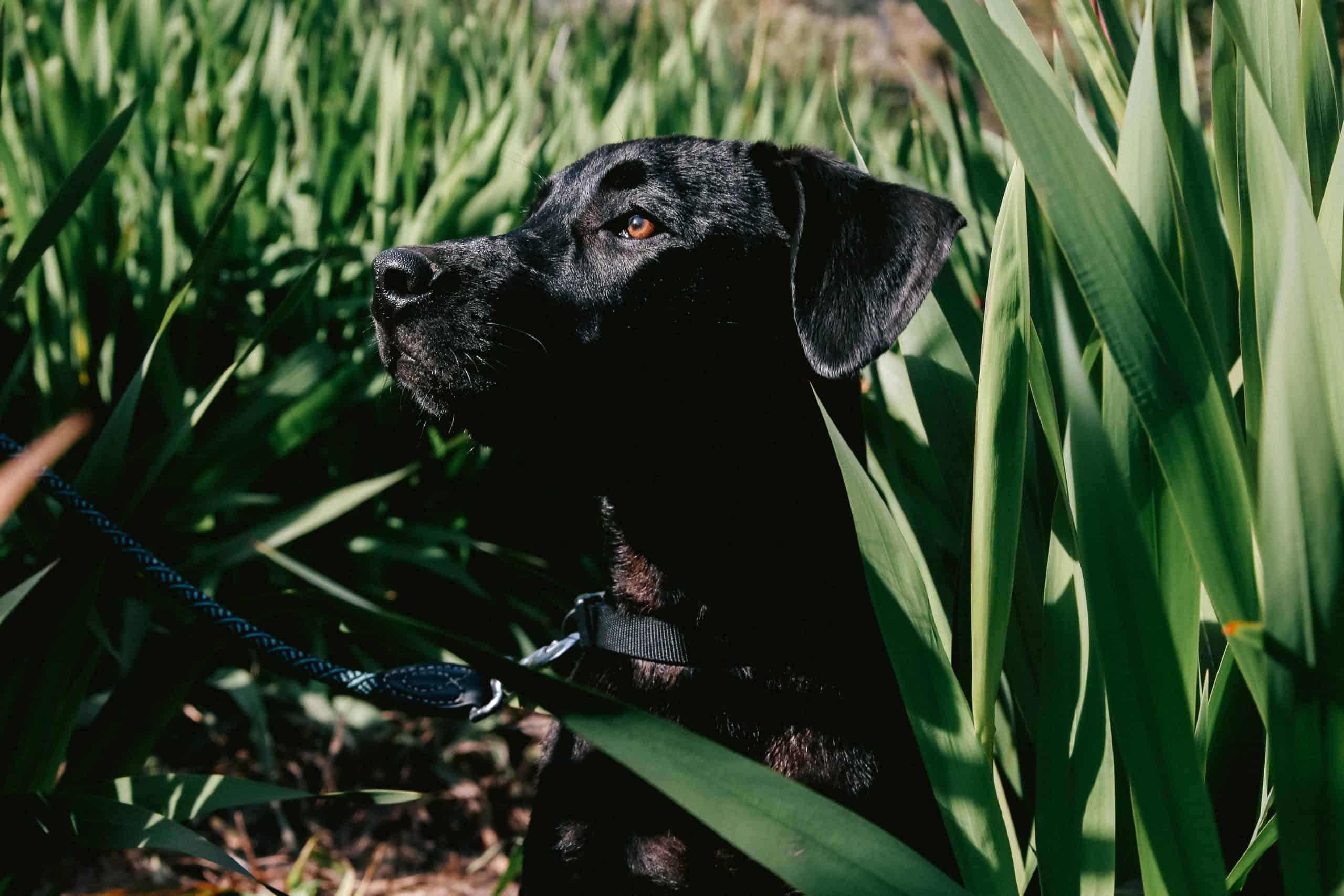 Canva Close Up Photo of Black Dog scaled
