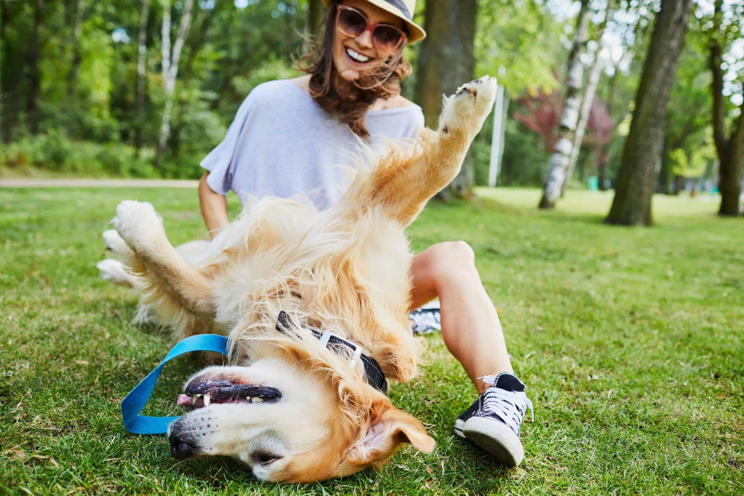 dogs ticklish