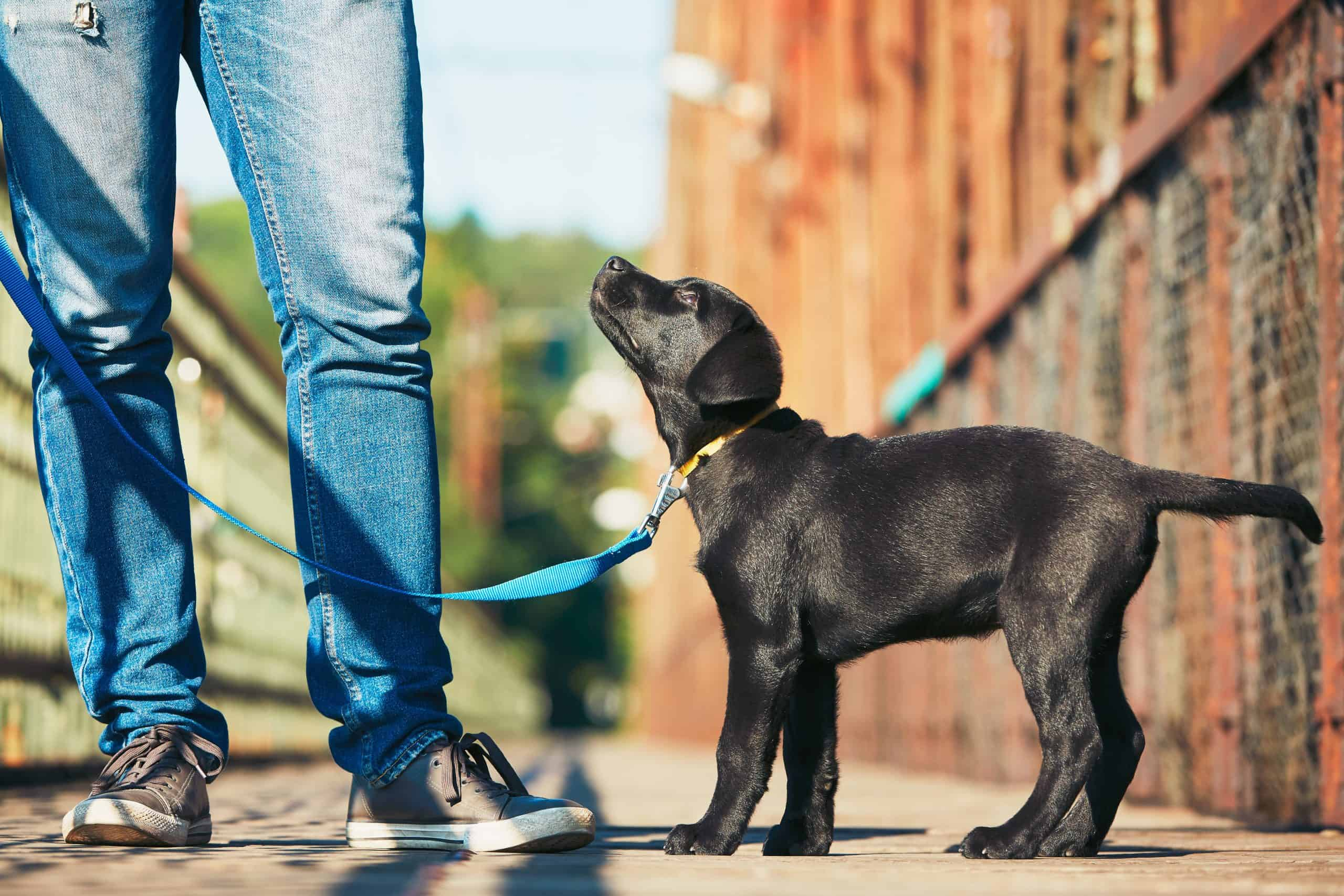 Canva Morning walk with dog scaled