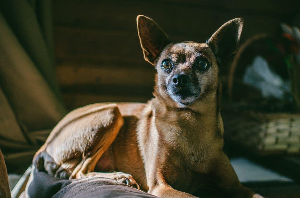 Canva - Short-coated Brown Dog Lying on Floor Inside Room