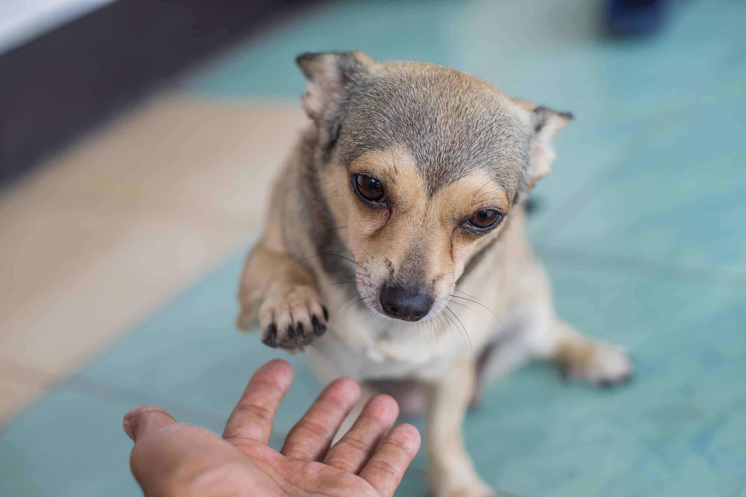 Canva give me your pet hand My dog lovely scaled