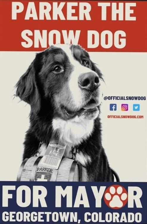 dog mayor