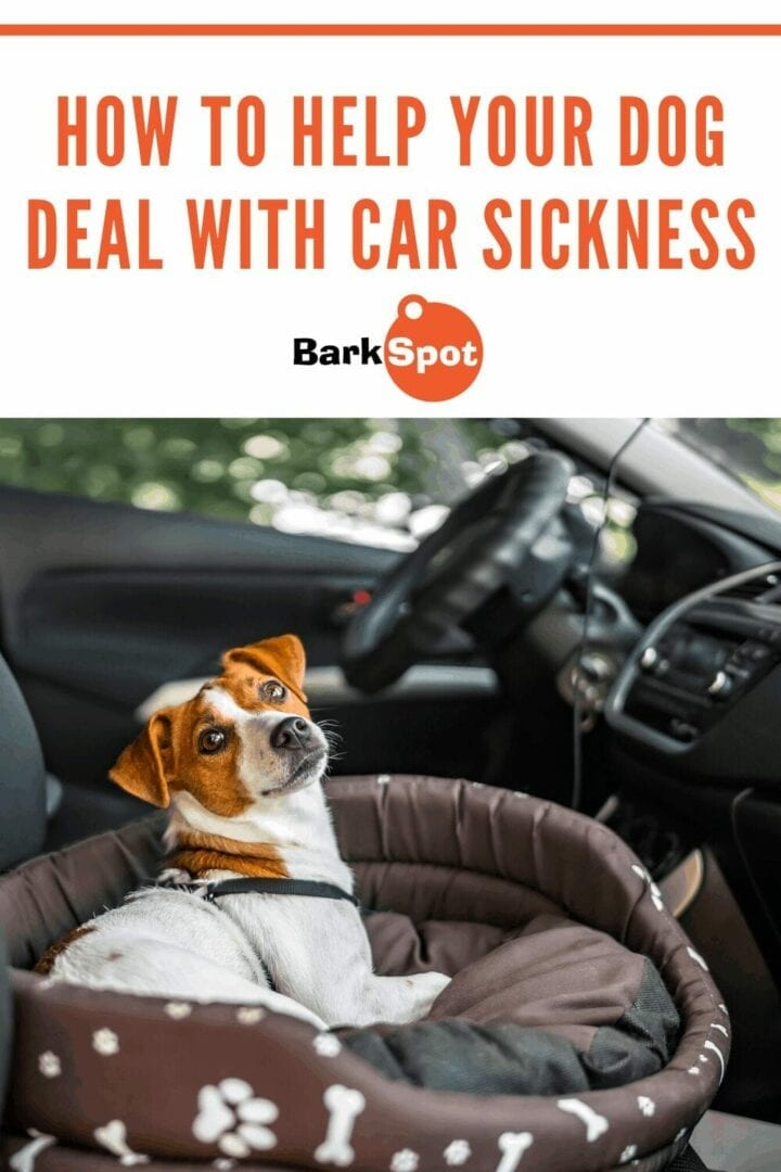 help your dog with carsickness pin