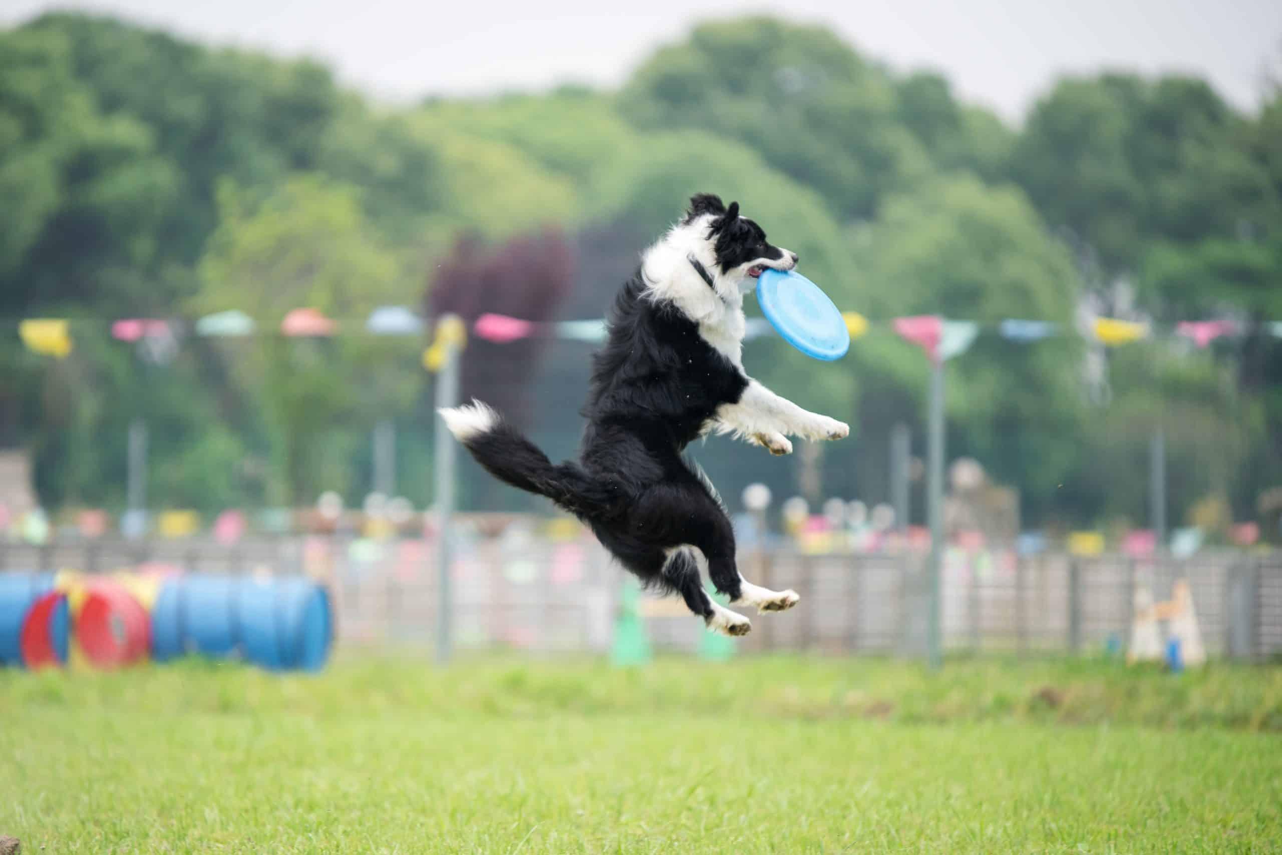 smartest dog breed