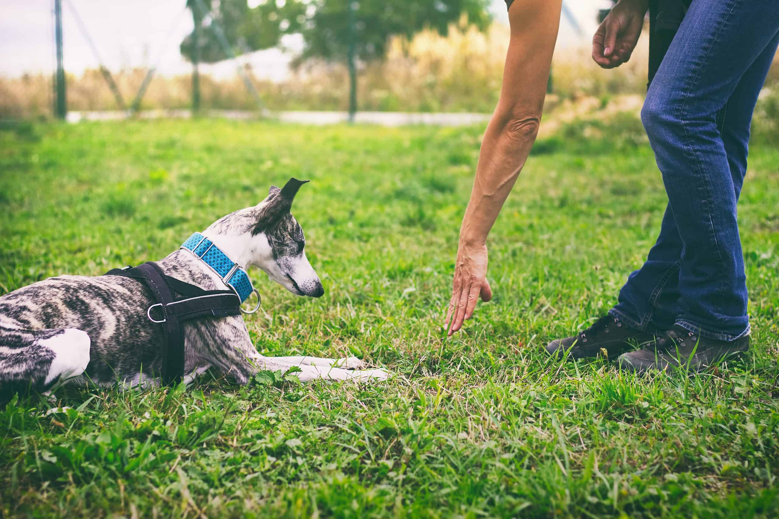Canva Woman is training her dog to lie down scaled