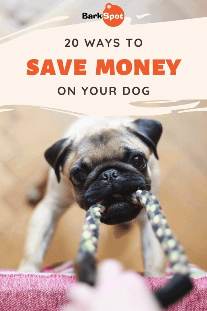 save money on your dog pin 1