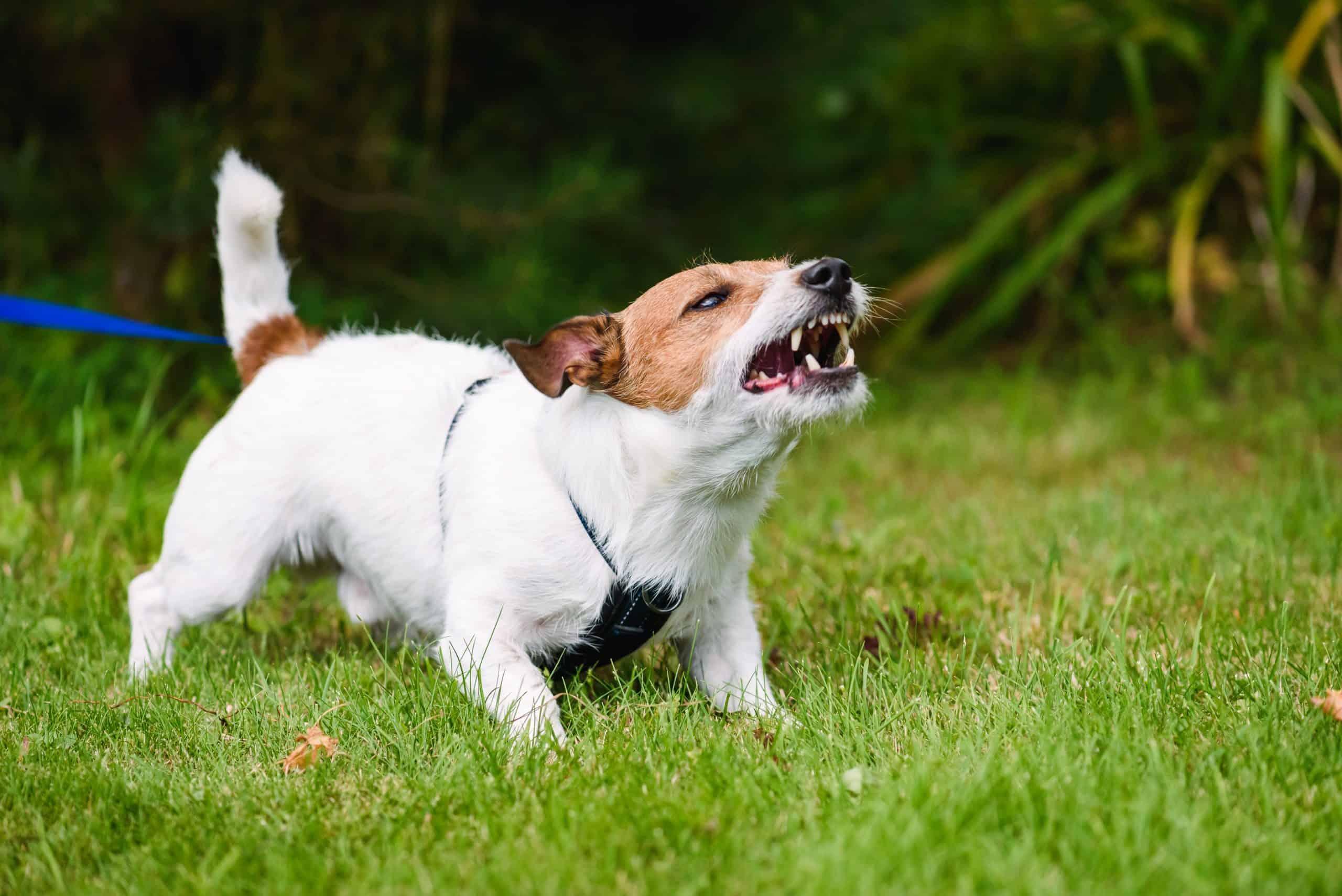 dogs bark at strangers