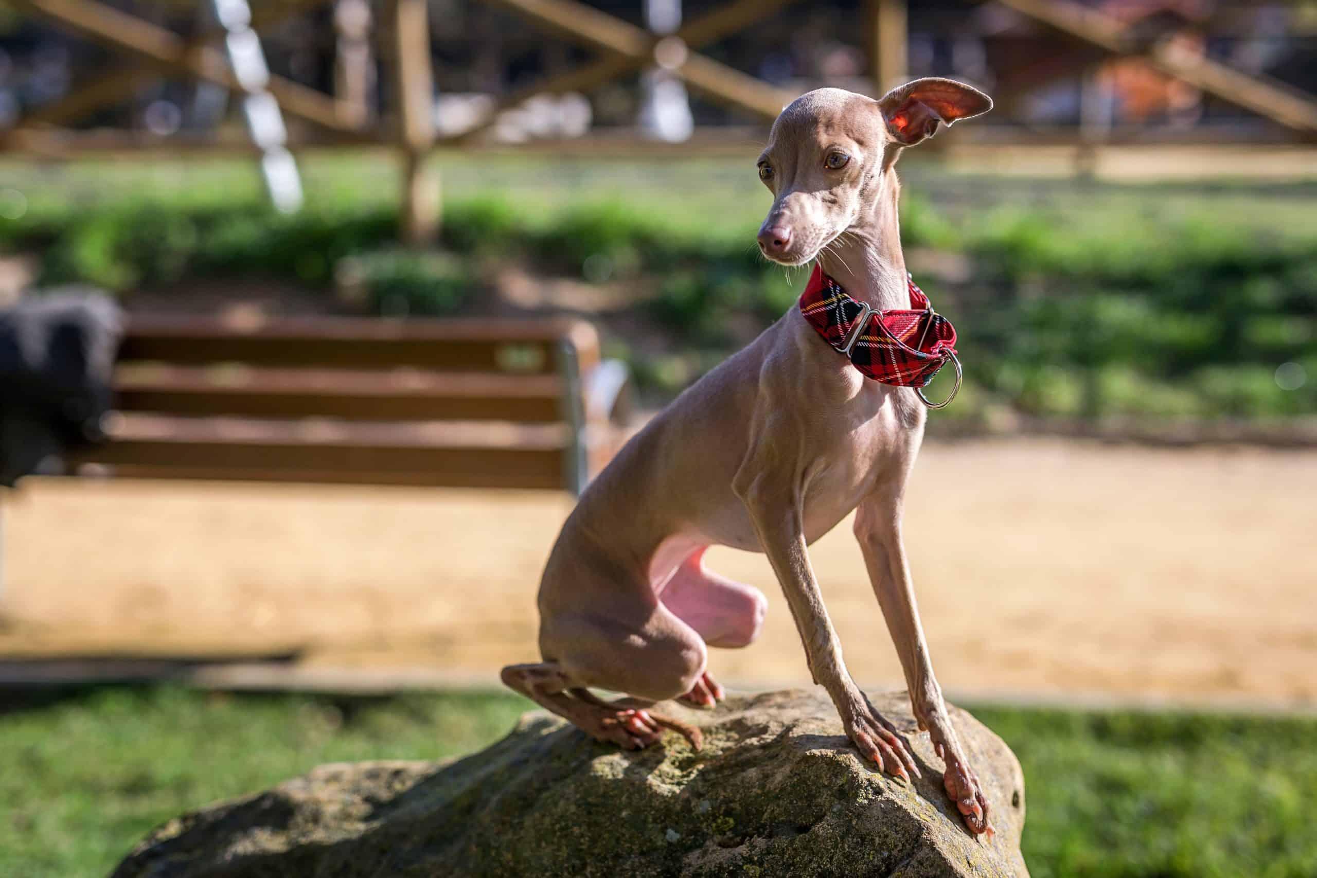 clingy dog breed