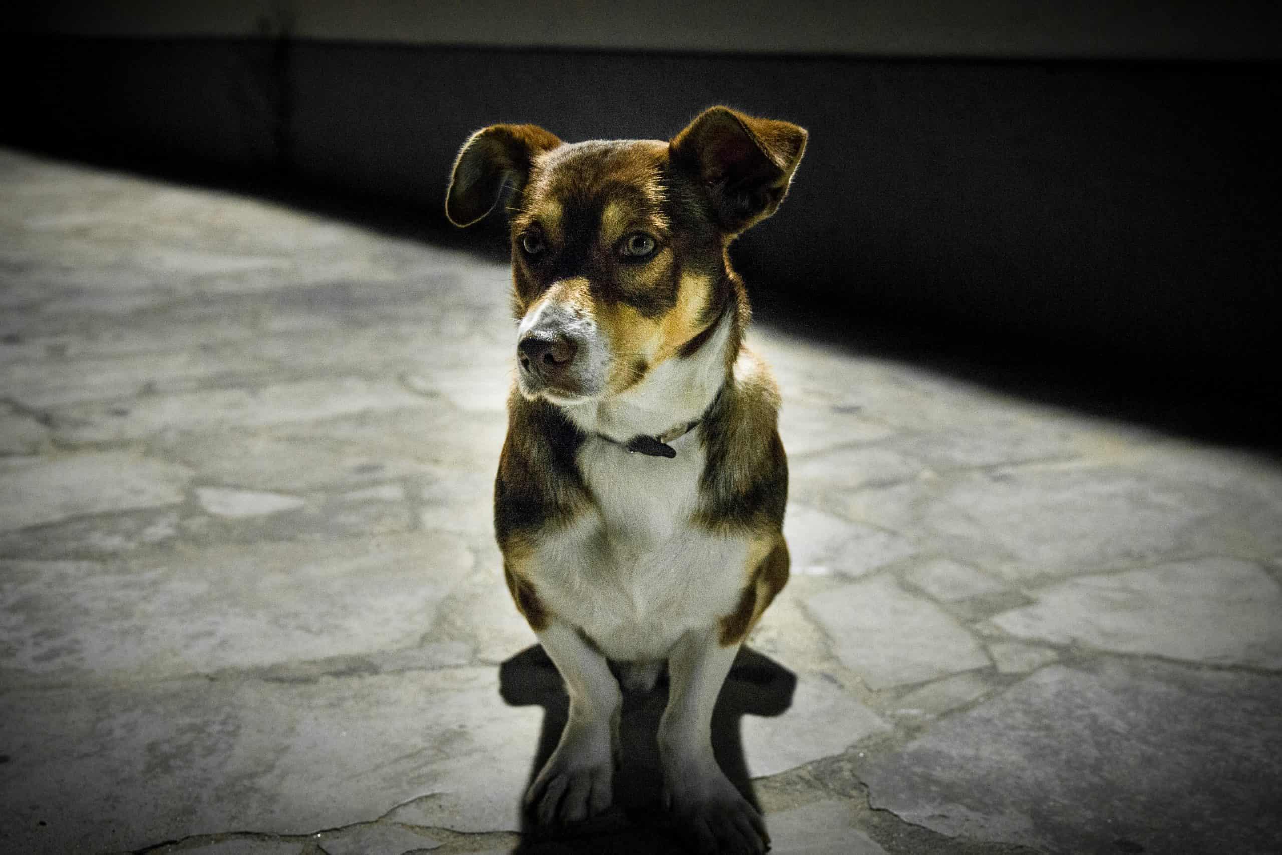 dogs sense ghosts