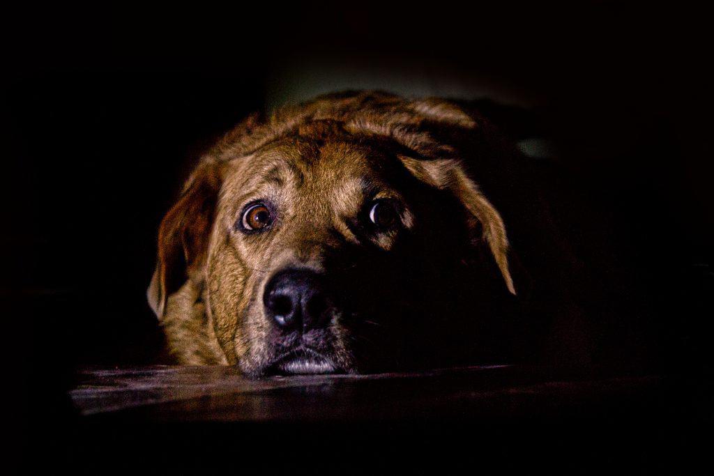 Canva scared dog