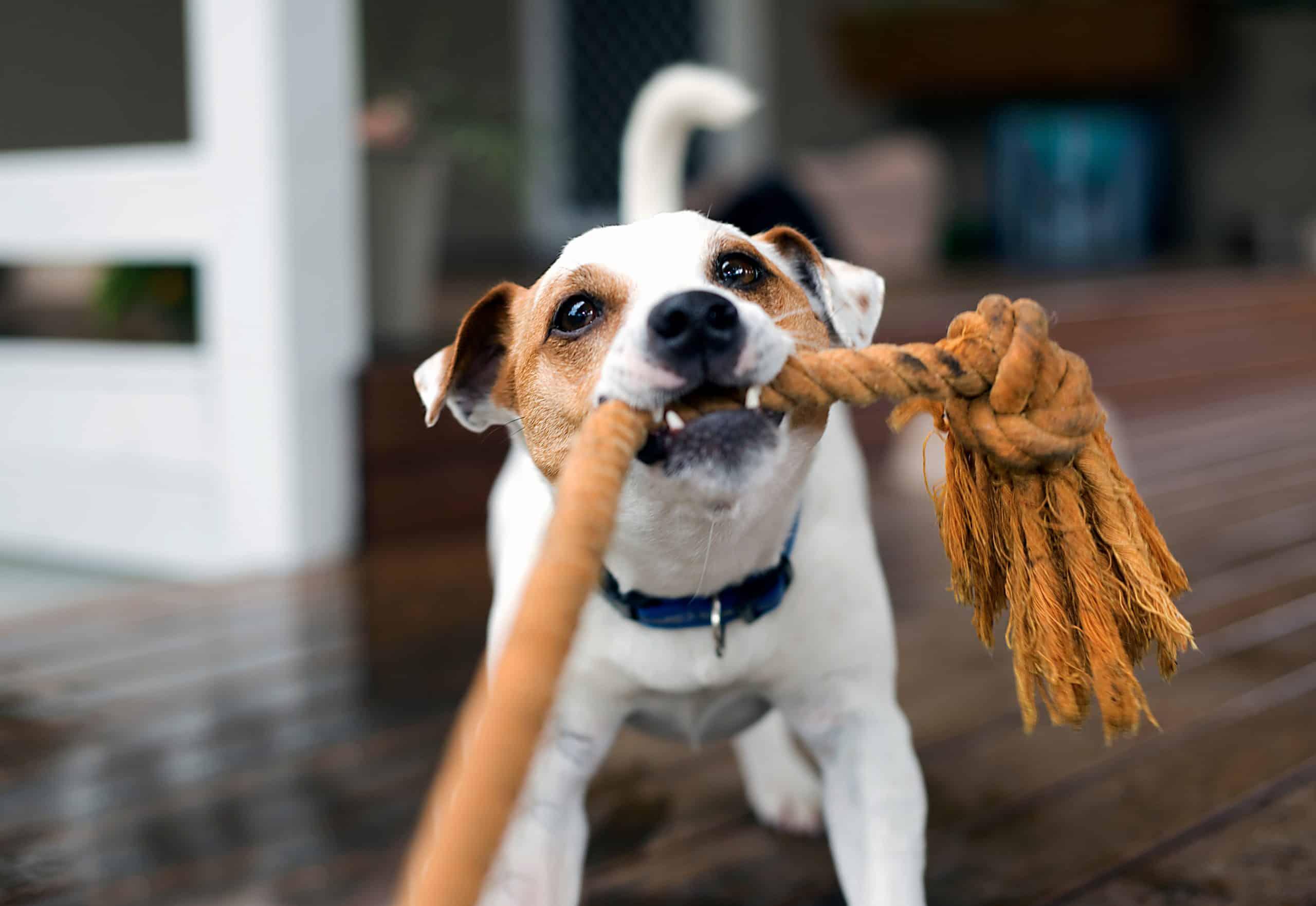 dog myth