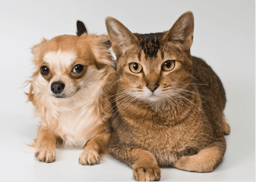 dog breeds that like cats