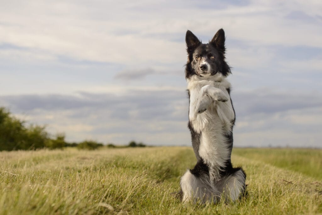 tips to exercise your dog's mind