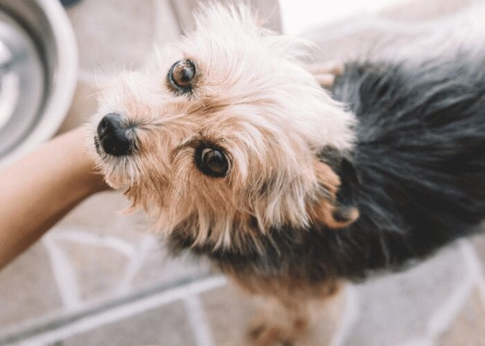 tips to determine your dog's age