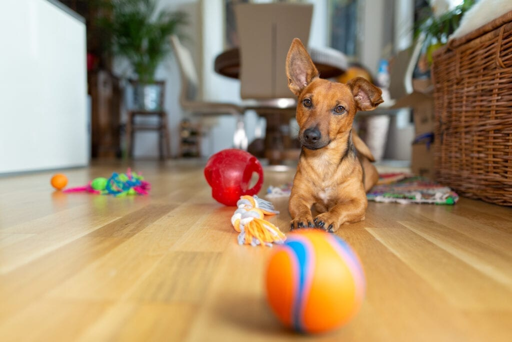 exercise your dog's mind