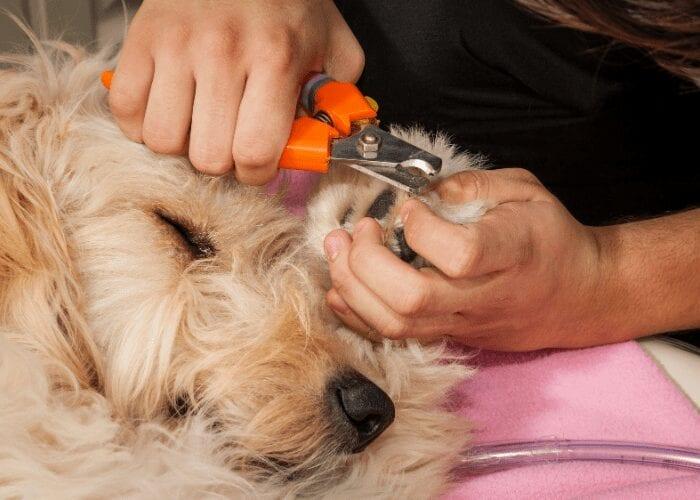trim dog nails on back