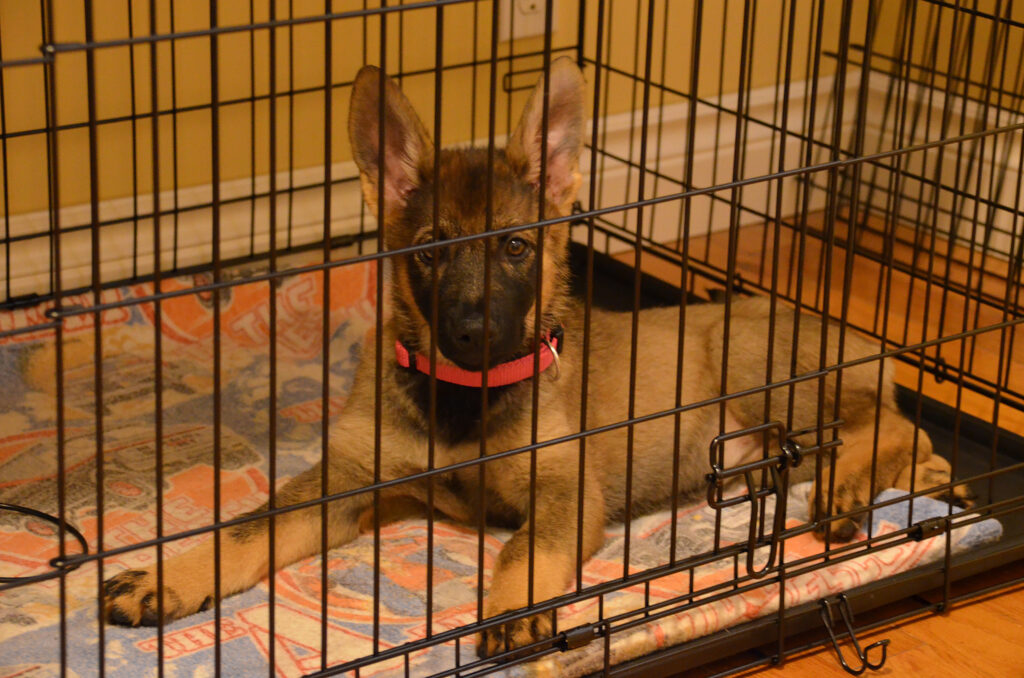 GSD in crate