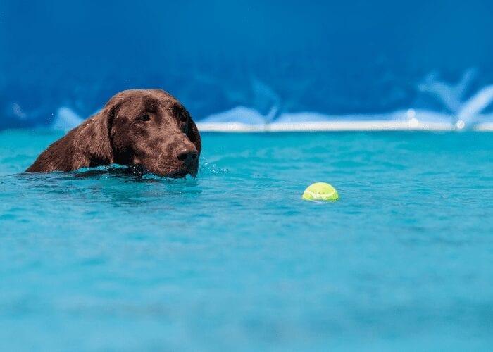 dog breeds that love to swim