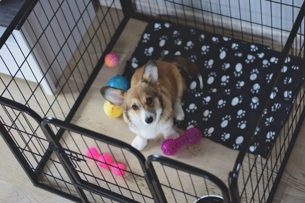 tips for crate training your dog