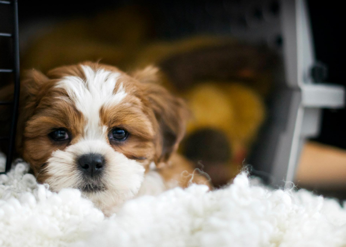 tips to crate train your puppy