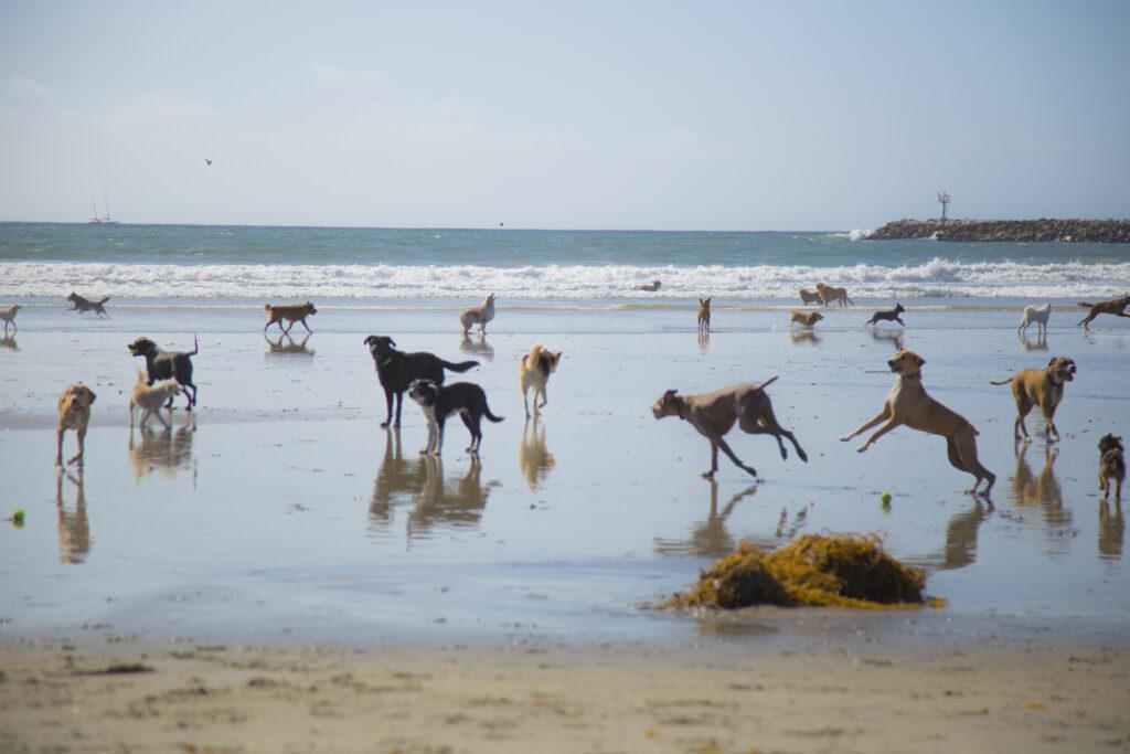 dog beaches