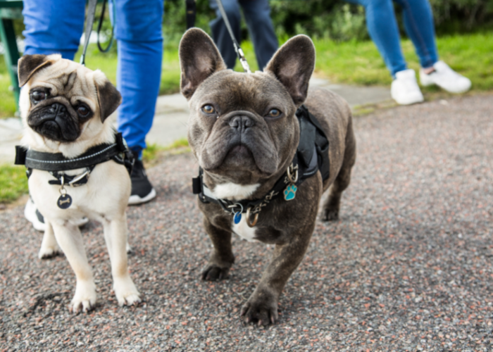 here's how often you need to walk your dog