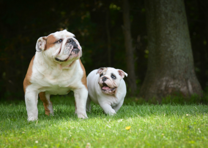 when should I get a second dog?