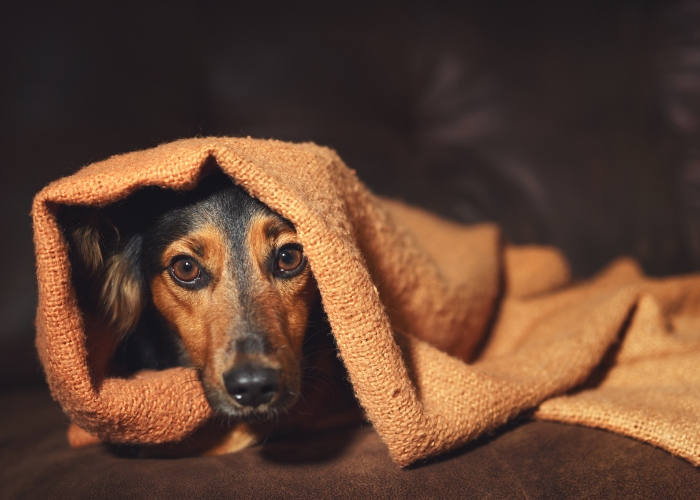 dog anxiety medication for dog anxiety