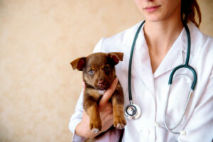 female puppy with vet scaled 1